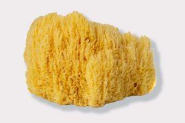 Natural Sea Sponge #4