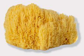 Natural Sea Sponge #5